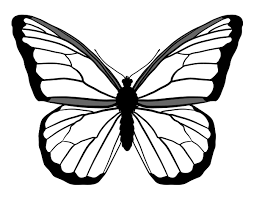drawing butterfly pictures.  Drawing Drawingbutterfly_43_monarch Inside Drawing Butterfly Pictures