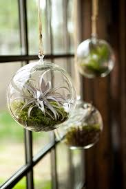 place air plants in terrariums hung from the window frame