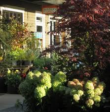 come visit our nursery and garden center our greenhouse in spring and summer is filled with annuals vegetable starts and herbs