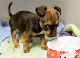 animal shelter dogs for adoption. Perfect Shelter The Redlands Animal Shelter Has Partnered With Assemblyman Marc Steinorth  To Cover Pet Adoption Fees On Aug 45 2017 To Dogs For Adoption S