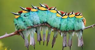 Αποτέλεσμα εικόνας για πουλια