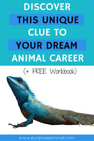 unique careers animals cars mmogspot a unique clue to your dream animal career posts the o jays and