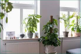 Deko Fensterbank Schlafzimmer Die Besten 25 Fensterbank Deko Ideen