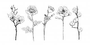 Premium Vector | Realistic hand drawn flowers collection