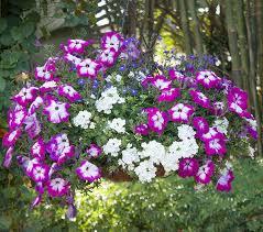 container garden design. Wonderful Garden Design More With Less Throughout Container Garden E