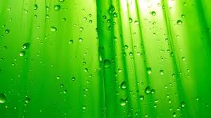 cool green backgrounds. Delighful Cool Coolgreenbackgroundswallpaper1 For Cool Green Backgrounds A
