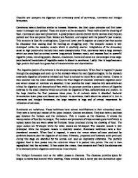 digestive system essay academic digestive system essay anti gun control essays
