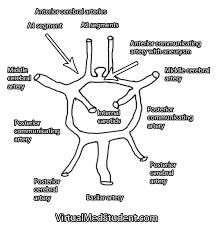 Virtualmedstudent Com Anterior Communicating Artery Aneurysms