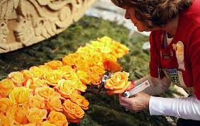 Rose Bowl Float Decorating Rules Float Decorating Viewing And Post Parade 49