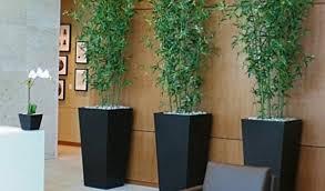 office indoor plants. Download By Size:Handphone Tablet Desktop (Original Size). Back To Best Indoor Desk Plants Office F