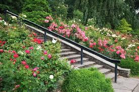 portland rose garden portland oregon usa