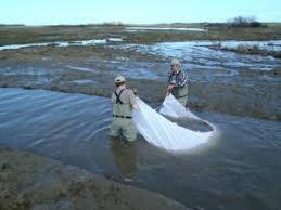 Fish And Aquatic Ecology H T Harvey Associates