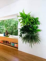 small plants for office. Office Plant Ideas Wondrous Small Plants Low Light Vertical Garden For Desk