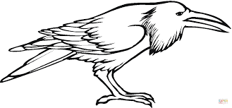 Small Picture Raven bird coloring page Free Printable Coloring Pages