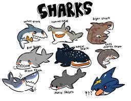 cute shark drawing tumblr. Brilliant Shark Shark And Cute Image In Cute Shark Drawing Tumblr M