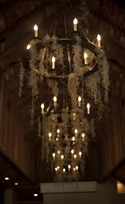 picture of antique styled chandeliers bulbs remind of candles and airplants instead of spiderweb