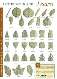 Tree Identification Chart Education Materials