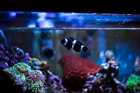 Fish Tank How To Clean A Dirty Fish Tank The Right Way