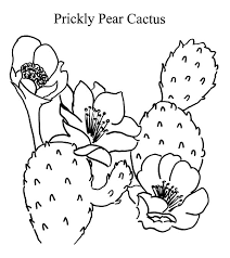 Small Picture Prickly Pear Cactus Coloring Pages Prickly Pear Cactus Coloring