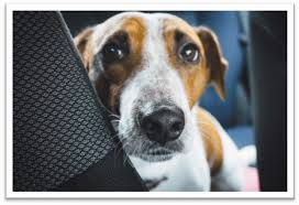 the counter dog sedative for car travel
