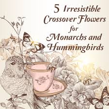 hummingbird garden plants. Wonderful Hummingbird Attract Both Monarch Butterflies And Hummingbirds With These Nourishing  Nectar Plants Never Be Alone In On Hummingbird Garden E