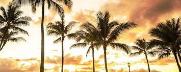 Image result for Sheraton Waikiki sunset