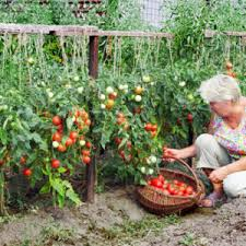 Small Picture Balcony Vegetable Garden Ideas India Archives Catsandfloralscom