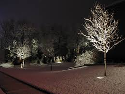 landscape lighting trees. Delighful Trees Latest Landscape Lighting Ideas Invisibleinkradio Home Decor Outdoor  Palm Trees Image Of Tr Full Size For
