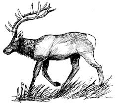 Dessin Coloriage Animal Cerf Animal De La Foret Education