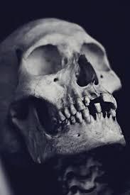 skull - Buscar con Google