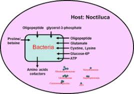 Wordens Pond Depth Chart Rare Bacteria In Seawater Are Dominant In The Bacterial