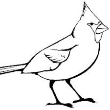 Small Picture Sketch of Cardinal Bird Coloring Page Sketch of Cardinal Bird