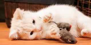 the 10 best homemade cat toys world s best cat litter blog clearing the air