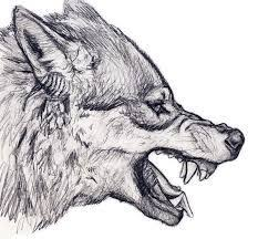 Drawn Wolf Image Result For Wolf Head Drawing Side Monster Ideas Drawings