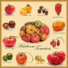 Heirloom Tomato Varieties Growing Tomatoes Best Tasting