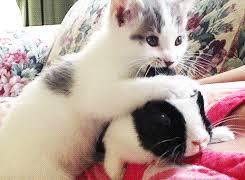 """Résultat de recherche d'images pour """"gif de chat"""""""