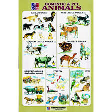 Pet Animal Picture Chart Chart No 20 Domestic And Pet Animals