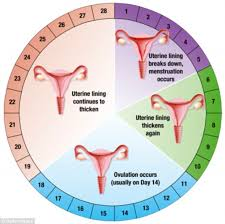 Periods Diet Chart What You Should Eat On Your Period Daily Mail Online