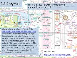 Iubmb Nicholson Metabolic Pathways Chart Essential Idea Enzymes Control The Metabolism Of The Cell