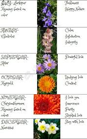 Month Flowers Chart Is There A Flower For Each Month Sistem As Corpecol
