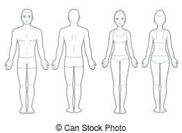Male Body Front And Back Male Body In Underwear Front And