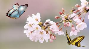 Image result for butterfly and  flowers