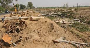 Image result for punjab road tree cutting