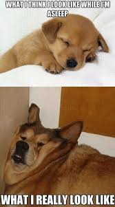 Puppy-Sleeping-Vs.-Lazy-Old-Dog-Sleeping-Meme.jpg via Relatably.com