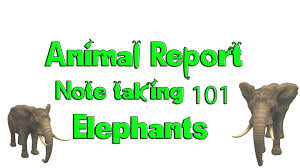 how to write an animal report note taking african elephants  how to write an animal report note taking african elephants discovery