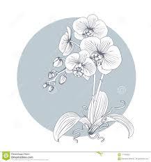 линия нарисованная рукой эскиза цветок орхидей иллюстрация вектора