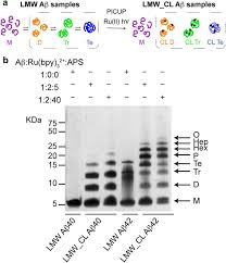 sds page ysis of aβ oligomers is