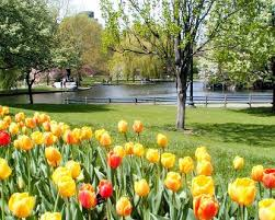 Small Picture Creative of Botanical Gardens Boston Flower Gardens Near Me Alices