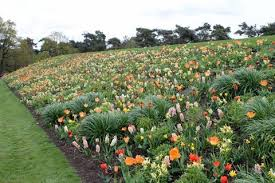 Small Picture Garden Design Garden Design with Plant a Bulb Garden with