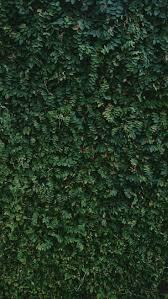 textura verde wallpaper texture textura nature green wall muro verde